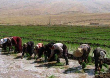 اشتغال زایی با حمایت از تولید/ بورسی شدن برنج موجب حذف واسطه ها شود