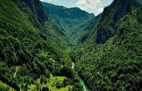 از آق مشهد تا واز؛ جنگلهایی که خورده میشوند/ جنگلهایی که دیگر در امان نیستند!