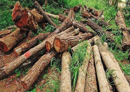 صدور مجوز بهرهبرداری از جنگل توسط منابع طبیعی/ به پیشنهادات برجامی منابع طبیعی تن نمیدهم