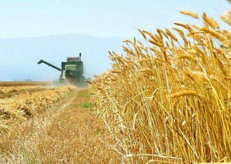 آیا حمایت از کشاورزی قراردادی گندم کافی است؟